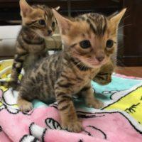 babycat2